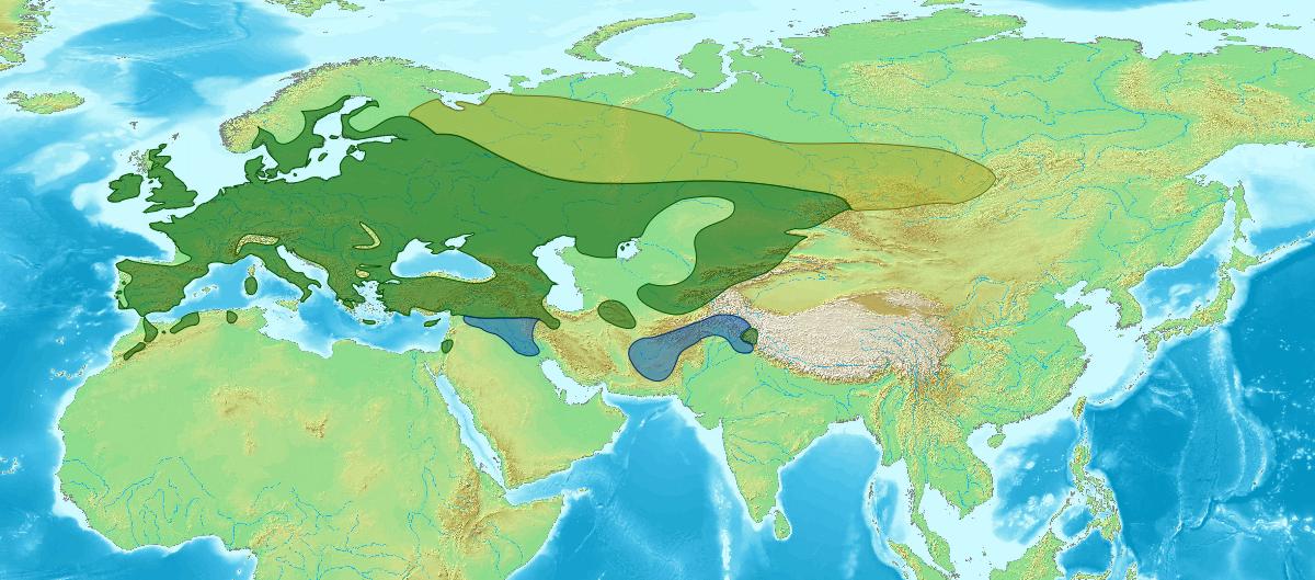 Von Eurasian_mass.jpg