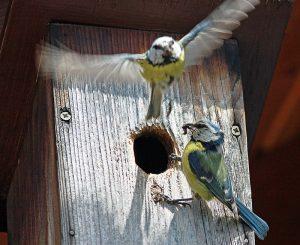 nesting-box-800