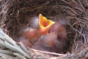 birds-nest-341322_1280