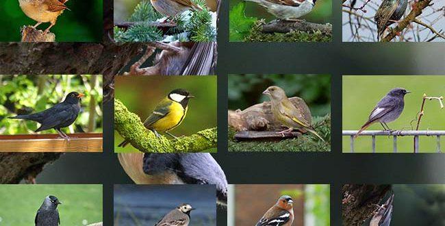 Vogelpalette-Gesamtuebersicht