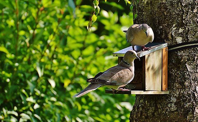Vogelfutterhaus-01