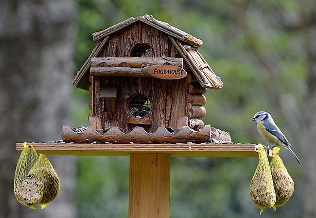 Vogelfutterhaus-02