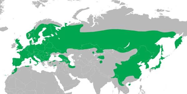 Ausbreitungsgebiet des Buntspecht